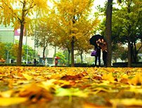 Shanghai adds 3 more streets retaining fallen leaves scenery