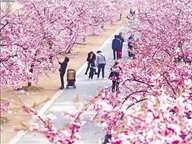 Crowds throng to parks as flowers bloom early due to warm winter