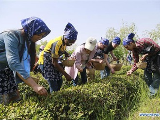 Foreign students experience Chinese tea culture in E China