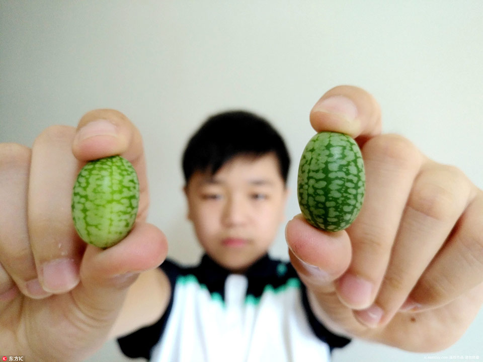 'Finger watermelon': cute but expensive