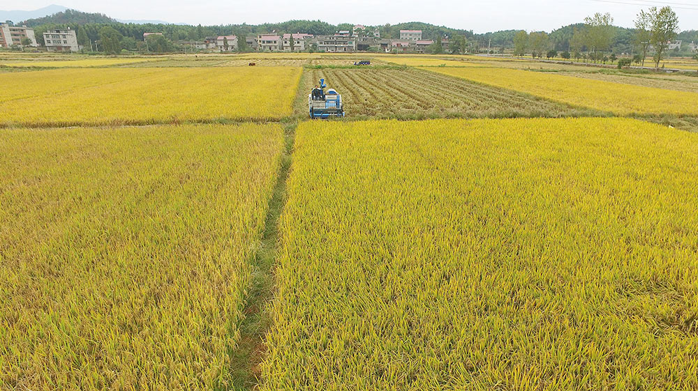 China's grain output expected to stay stable: re